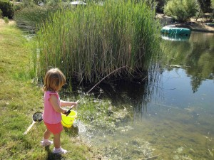 My daughter putting the 2 wt. stick to a bluegill.