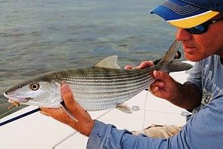 Pine island angler bonefish on the brain for Bone fishing key west