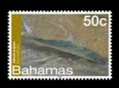 bahamas-marine-life