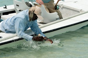 Norman tagging a bonefish for BTT