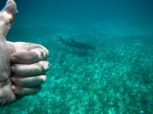 Nurse Shark, snorkeling with El Pescador.