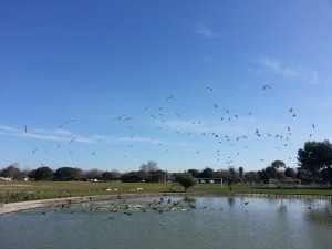 Lots and lots of birds.