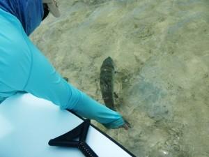 Nice fish.