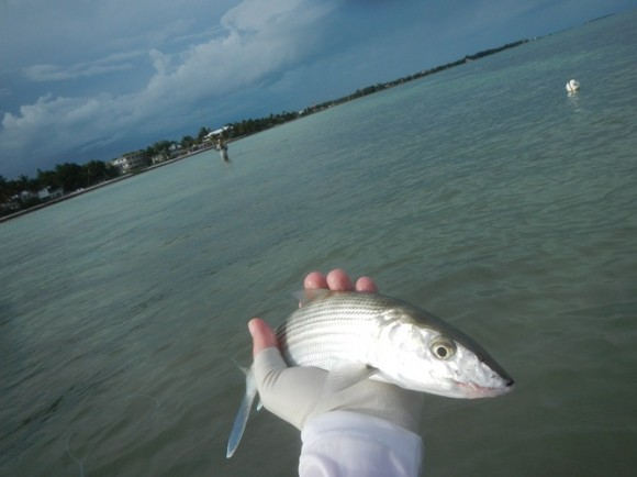 My one Florida Bonefish