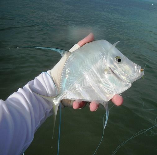 Cool fish.