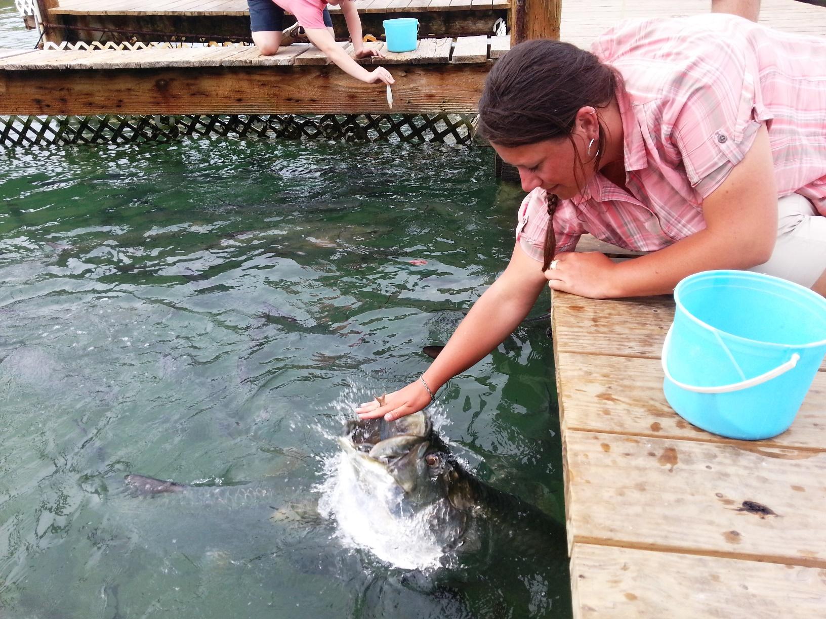 Adrienne feeding the tarpon at Robbies