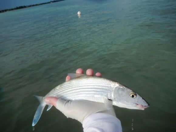 The bonefish