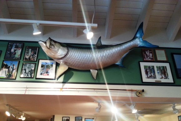 A tarpon hanging up at FKO.