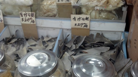 Shark fins for sale.