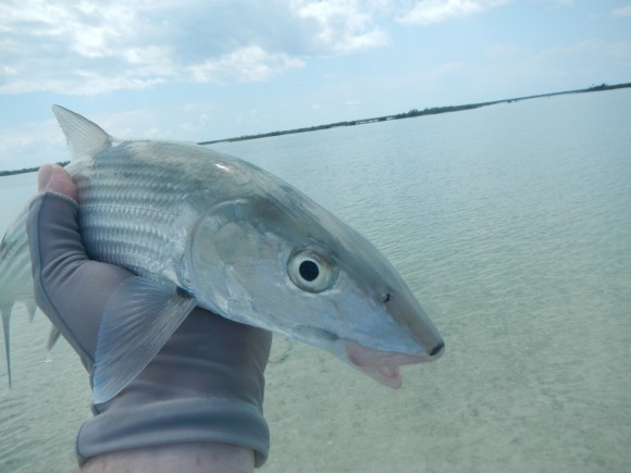 Hello Long Island Bonefish
