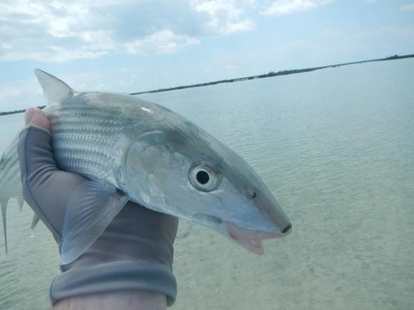Hello Long Island Bonefish