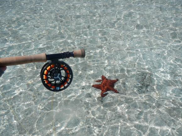 Long Island Star Fish
