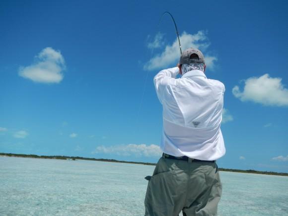 long island tandy fish