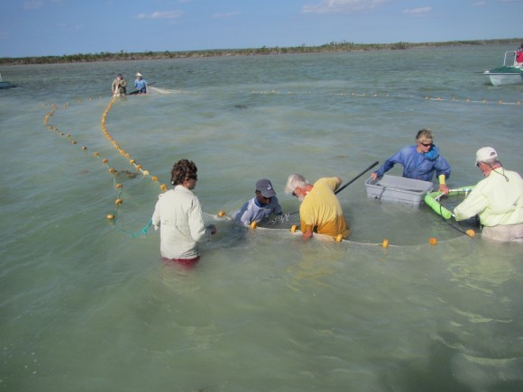 bonefishtagging