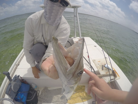 A cuda, trolled, the only fly caught fish of the trip.