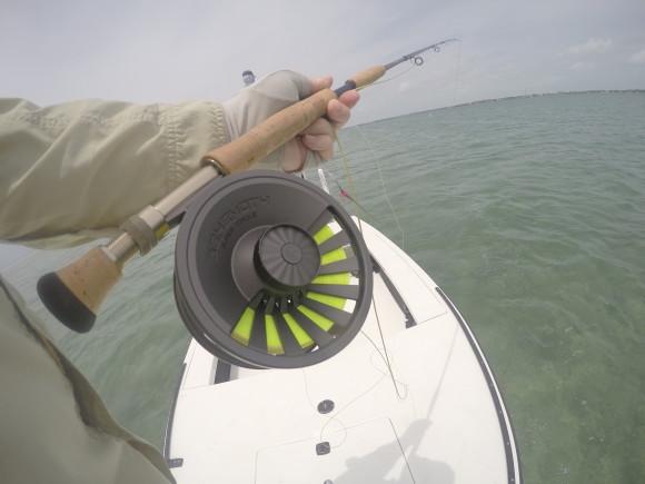 Big rod... good rod. The Predator 12 weight.